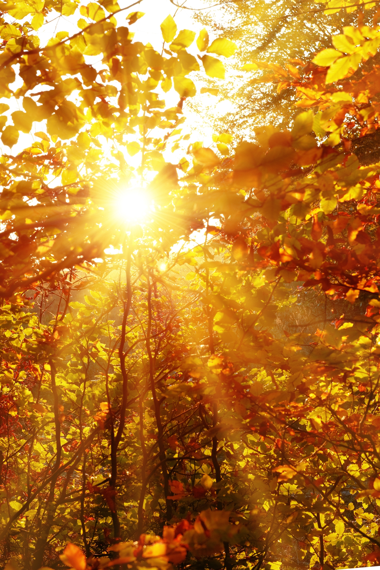 Sunbeam in autumn | Gabby Bernstein's spiritual tips for better sleep
