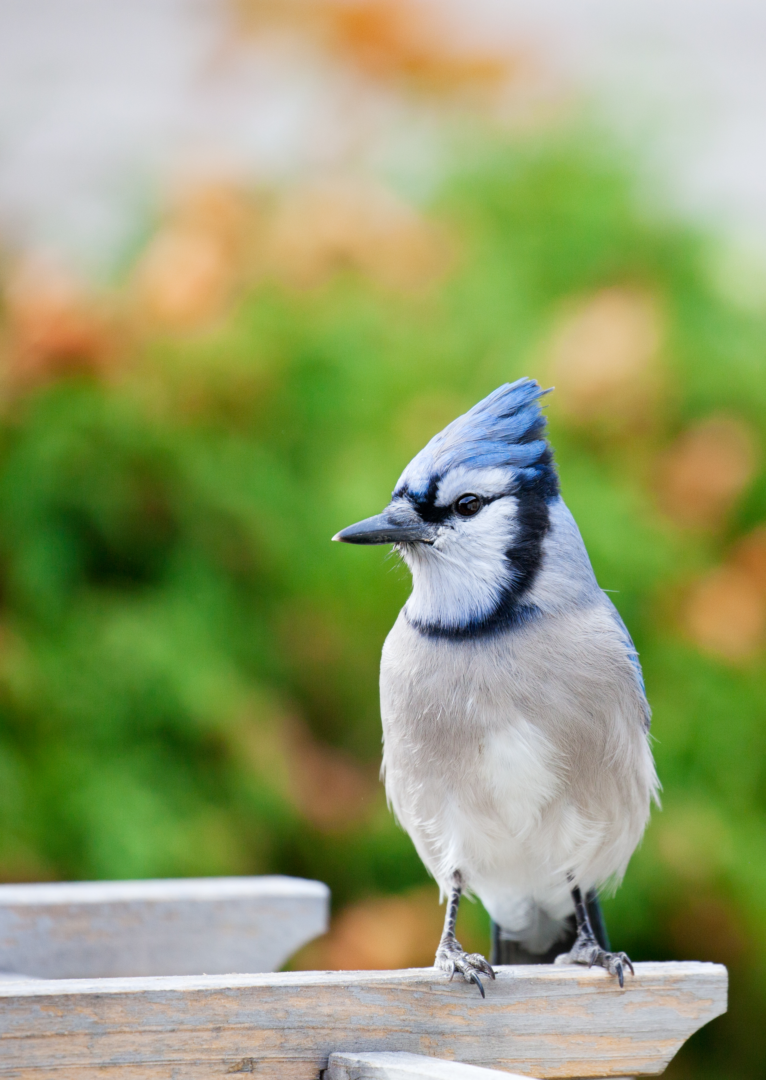 Bluejay | Dream home