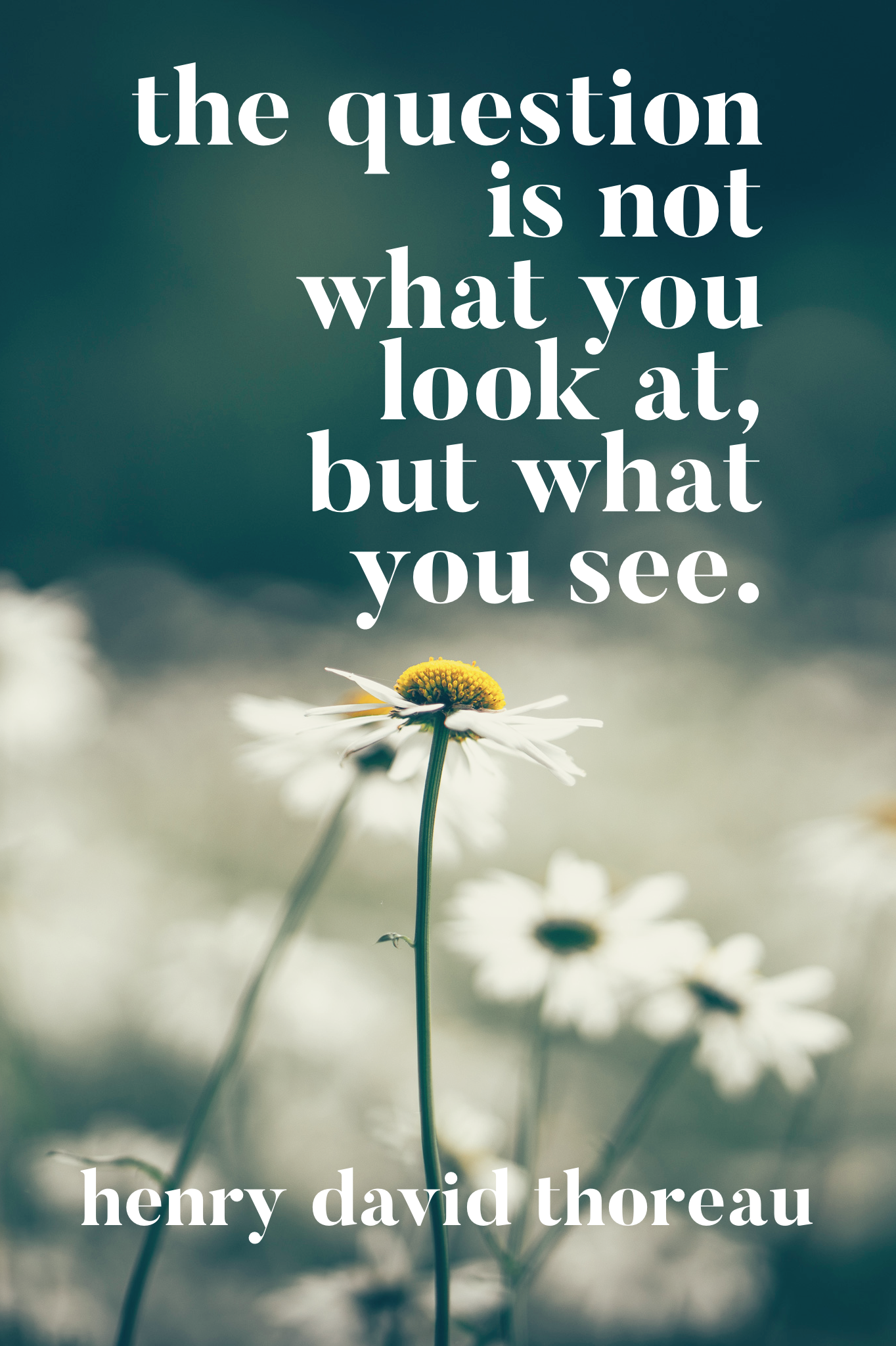 The question is not what you look at, but what you see | Henry David Thoreau