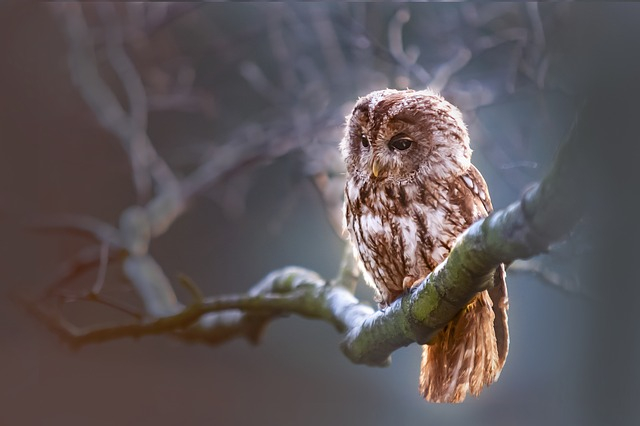 Owl   How to surrender your goals to the Universe